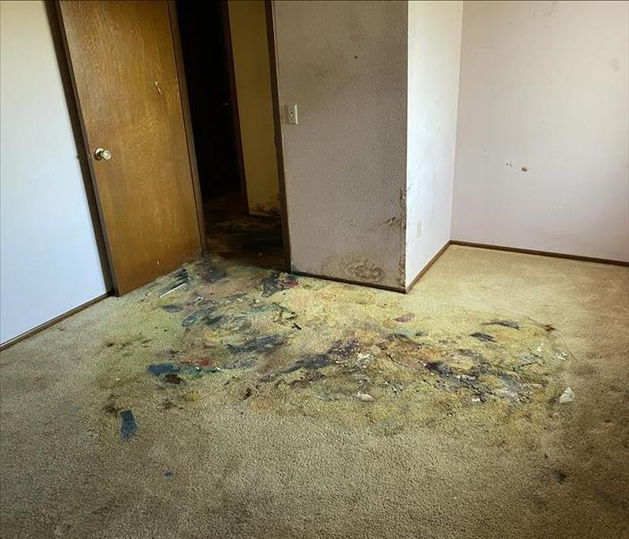 bedroom covered in mold